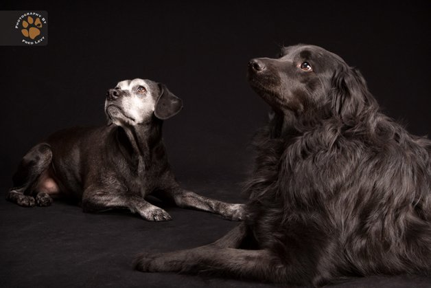 """Cão é fotografado para projeto """"Black Dogs Project"""""""