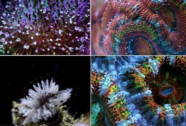 Vídeo hipnotizante feito com 150 mil fotos mostra movimentos de corais como você nunca viu antes
