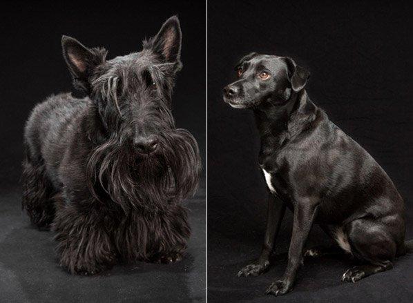 Você não vai acreditar no motivo pelo qual os cães dessa série fotográfica foram rejeitados