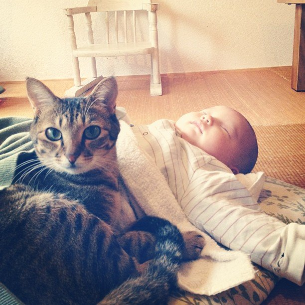 O gatinho Toco ganhou um novo amigo