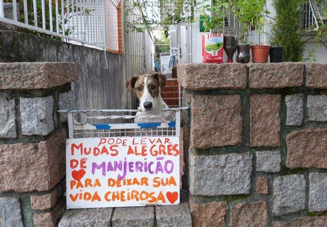 Mulher planta e doa mudas de manjericão na porta de casa para alegrar as pessoas