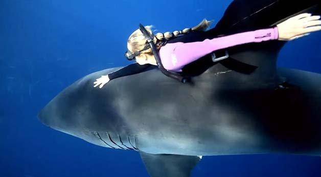 ocean-ramsey-sharks-3
