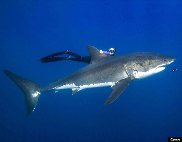 Bióloga nada com tubarões brancos para defender a espécie. O final é diferente do que você poderia esperar.