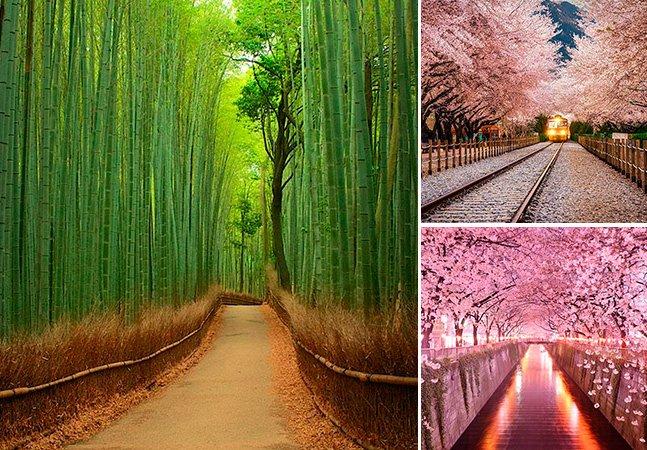 Acredite – esses 20 túneis por entre as árvores existem mesmo