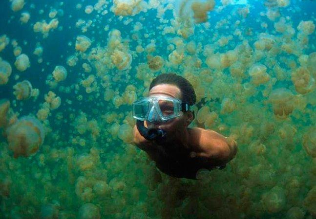 Já imaginou mergulhar num lago cheio de águas vivas?