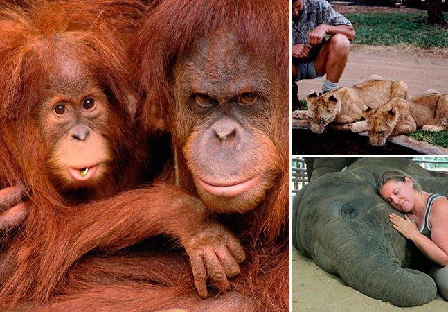 15 destinos que todo viajante que gosta de animais precisa conhecer