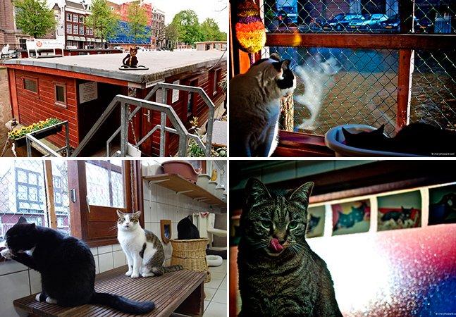 Conheça o barco feito pra dar abrigo para gatos abandonados em Amsterdã