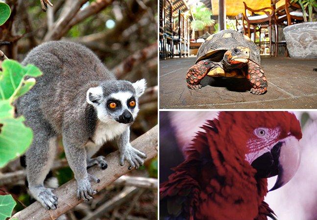 Bilionário transforma ilha particular em paraíso de animais raros