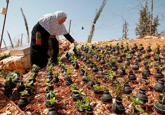 Mulher cria jardim com granadas desativadas para pedir paz na Palestina