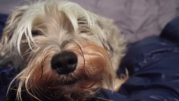 Saco de dormir para cachorros