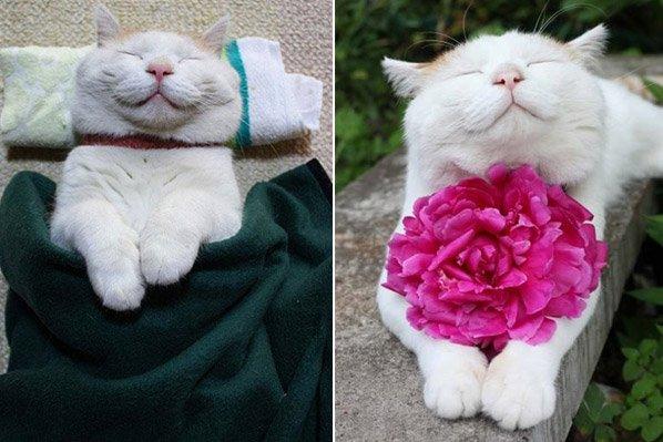 Conheça o gato mais zen e dorminhoco do mundo que ficou famoso na internet