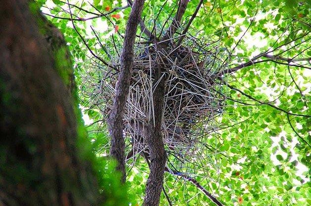 crow-nest-hanger-26