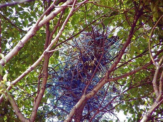crow-nest-hanger-82
