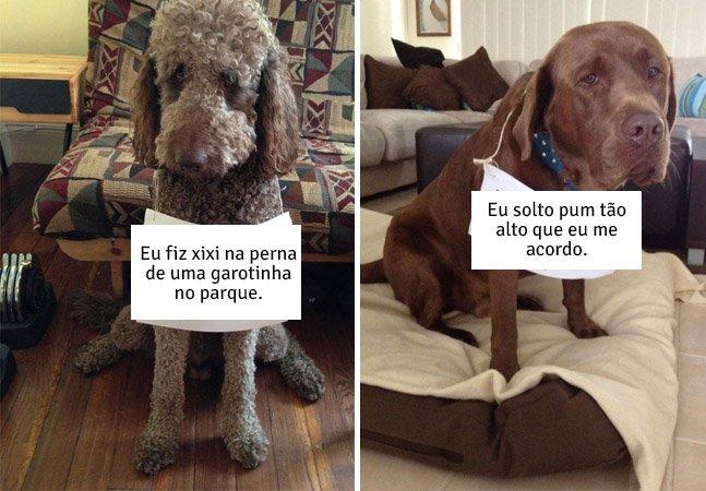 """Tumblr divertido reúne histórias de cães """"assumindo"""" que aprontaram"""