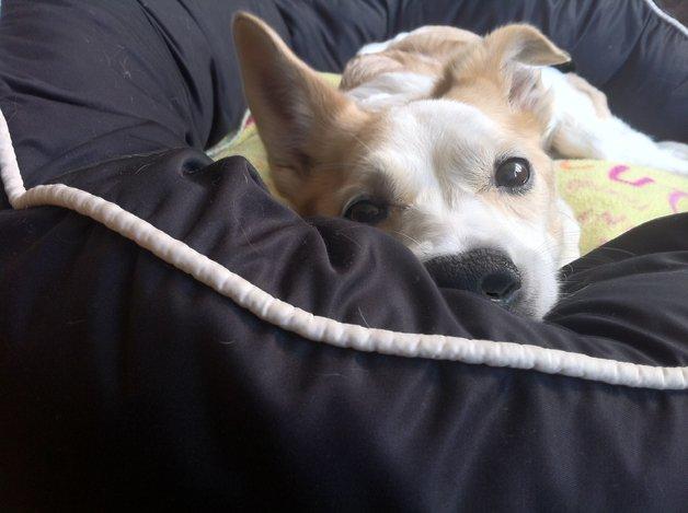 Mocinha, a cachorrinha que emocionou o Brasil