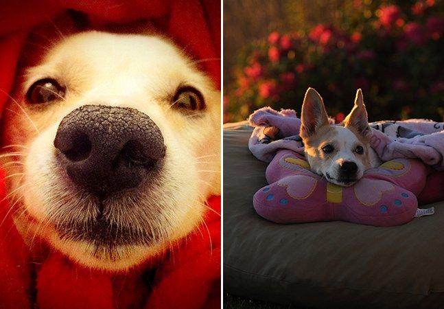 A história da cachorrinha tetraplégica que emocionou o Brasil e ajudou outros cães pelo caminho