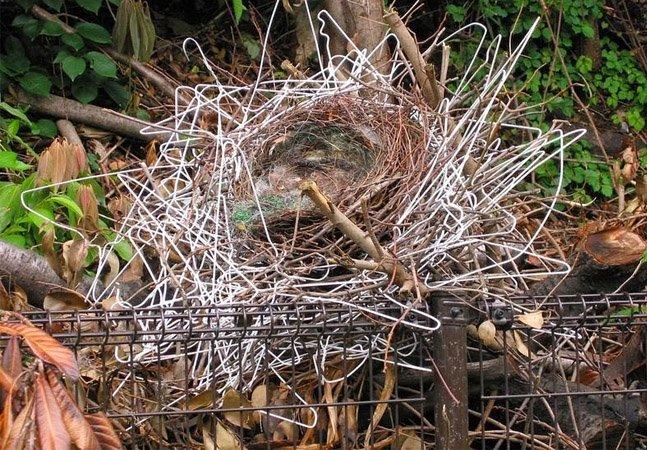 Inovação da natureza: na falta de galhos, corvos constroem incríveis ninhos feitos de cabides