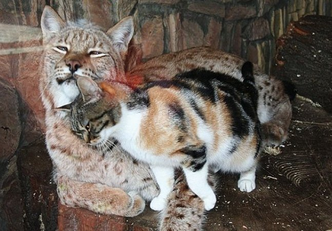 Conheça a amizade improvável que nasceu num zoológico na Rússia
