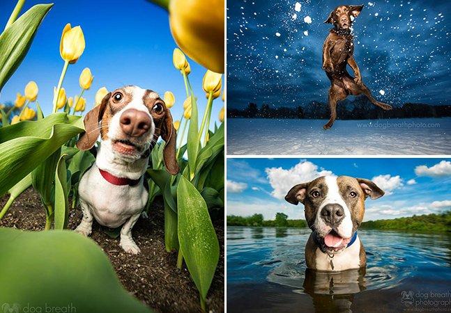Fotógrafa se especializa na arte de captar expressões dos cães – e o resultado são essas fotos adoráveis