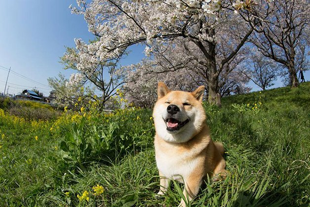 HappyMaru10