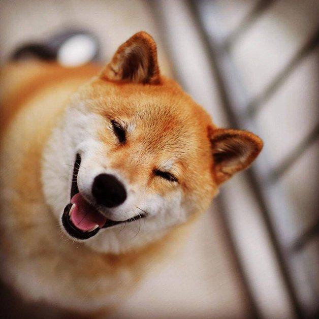 HappyMaru11