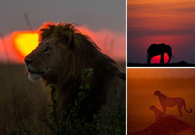 Conheça o trabalho do fotógrafo especializado em captar a beleza do nascer e do pôr do sol na savana africana