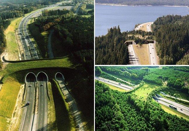 As pontes verdes pelo mundo que permitem que os animais atravessem estradas em segurança