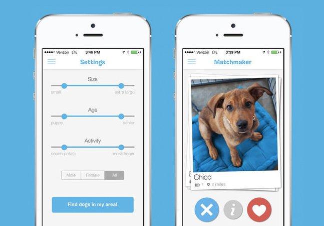 Conheça o 'Tinder animal', que ajuda cães a encontrar um novo dono