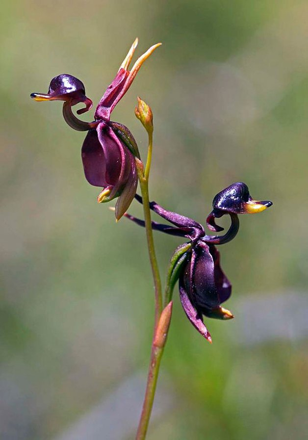 Flores que se parecem outra coisa