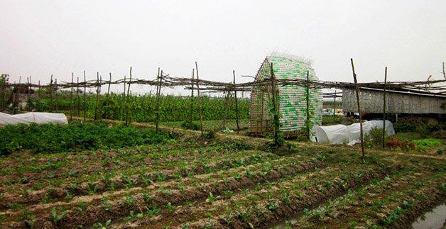 531d3a64c07a806cd90002a0_vegetable-nursery-house-1-1-2-international-architecture-jsc_14-1000x514