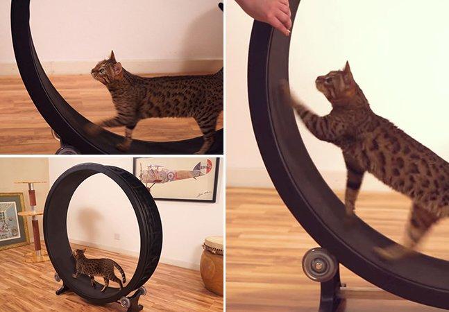 Empresa lança roda de exercícios para gatos que promete deixar os bichanos em forma