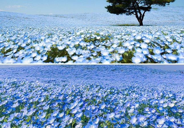 Primavera transforma parque no Japão em verdadeiro mar de flores