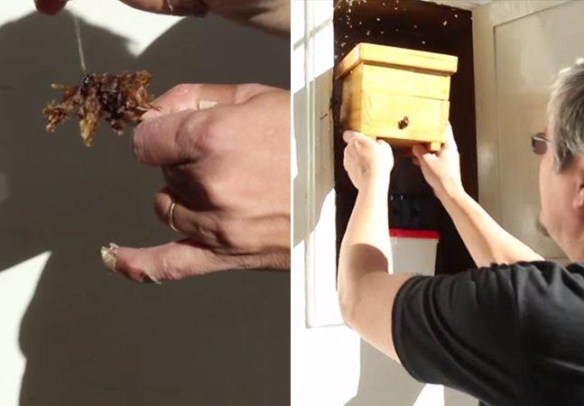 ONG paulista resgata abelhas sem ferrão para preservar o ecossistema da cidade