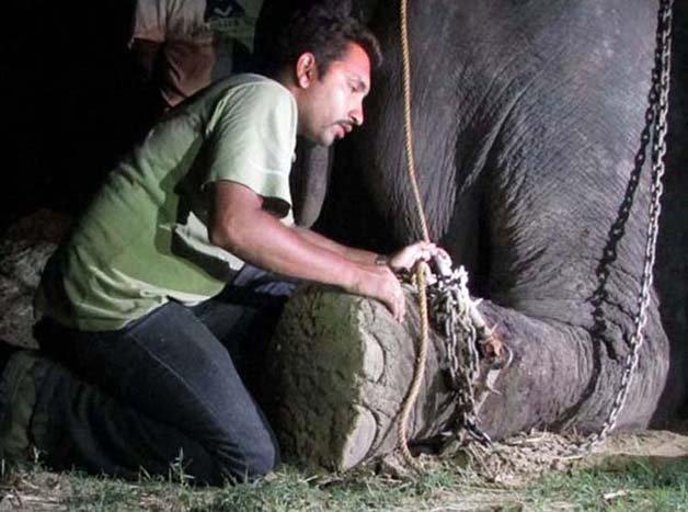 abused-elephant5