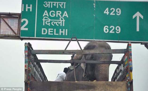 abused-elephant9