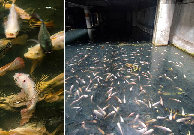 Shopping abandonado em Bangkok se transforma em um aquário espetacular