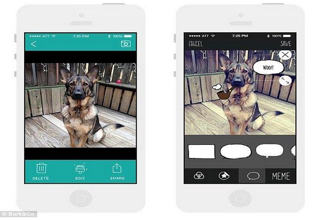Startup lança app que vai ajudar a tirar as melhores fotos do seu bicho de estimação