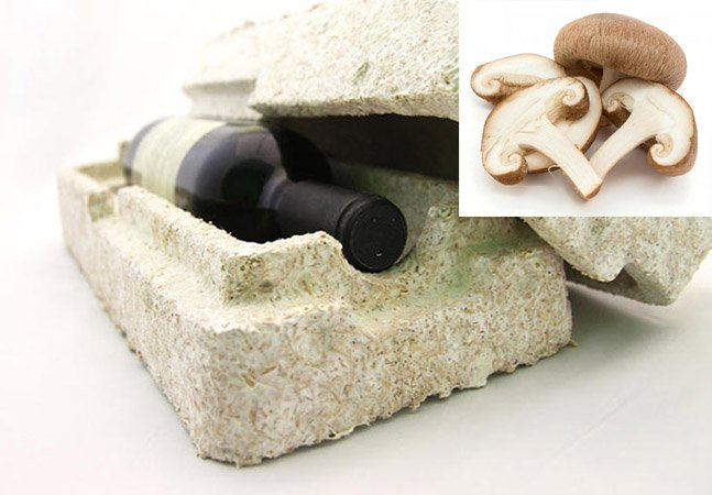 Empresa americana usa cogumelos como matéria-prima para substituir o plástico