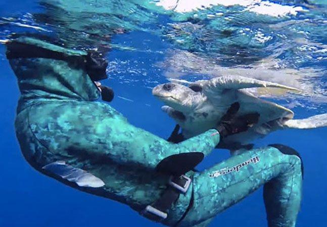 Vídeo mostra mergulhador salvando tartaruga que estava presa e recebendo agradecimento dela