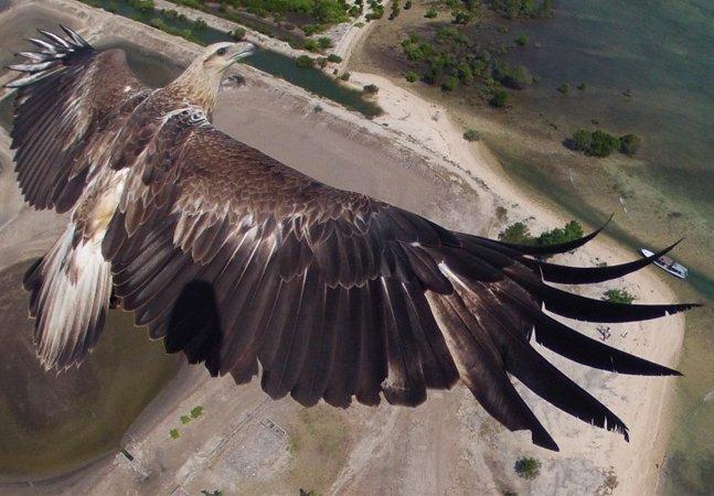 Confira o resultado do concurso que premiou as melhores fotos feitas com drones