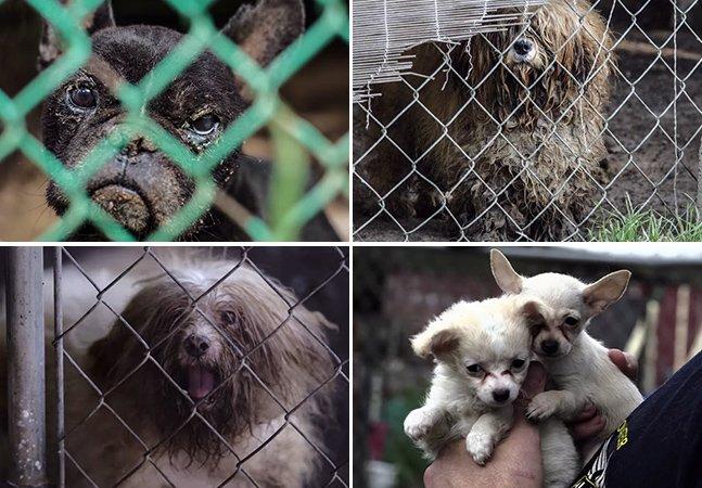 Vídeo mostra resgate de mais de 100 cães que viviam em condições extremas em fábrica de filhotes nos EUA