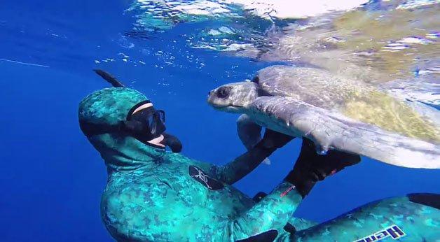 Mergulhador salva tartaruga presa em rede