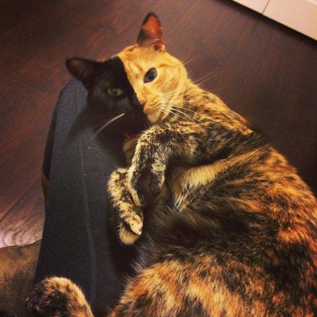 Venus, a gata que conquistou a internet