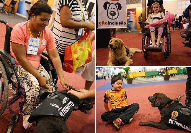 Projeto brasileiro disponibiliza gratuitamente cães treinados para ajudar cadeirantes