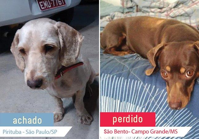 Site ajuda donos a encontrar seus animais de estimação perdidos