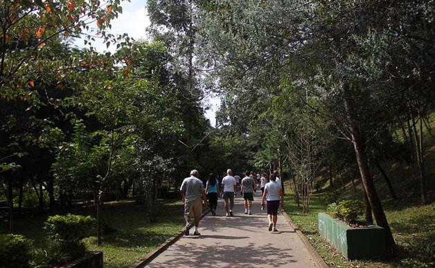 Aposentado planta mais de 16 mil árvores em São Paulo