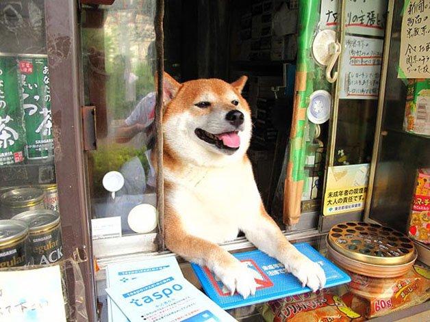 Cachorro é atendente em tabacaria em Tóquio