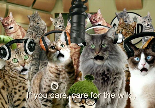 ONG usa gatinhos da internet para conscientizar sobre o risco de extinção de grandes felinos