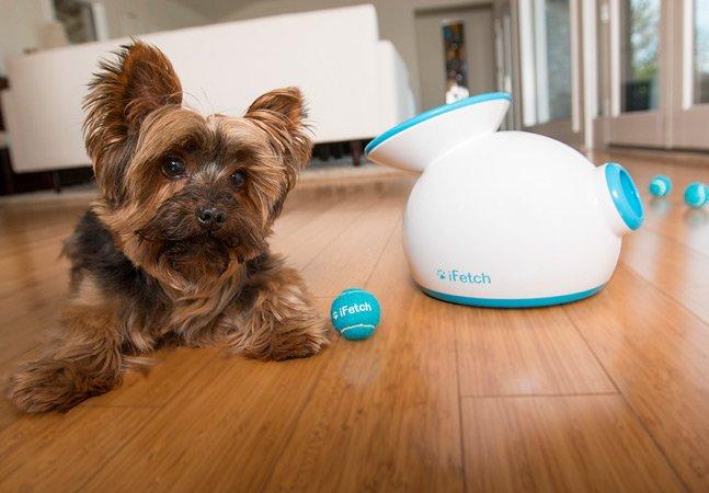 Conheça o produto que lança uma bolinha automaticamente para o seu cão brincar