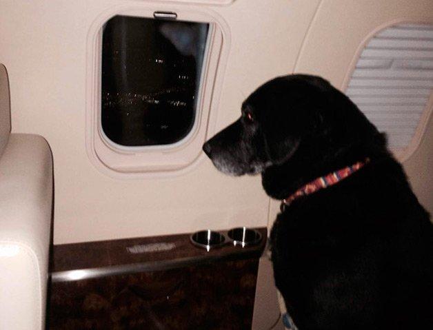lady-dog3